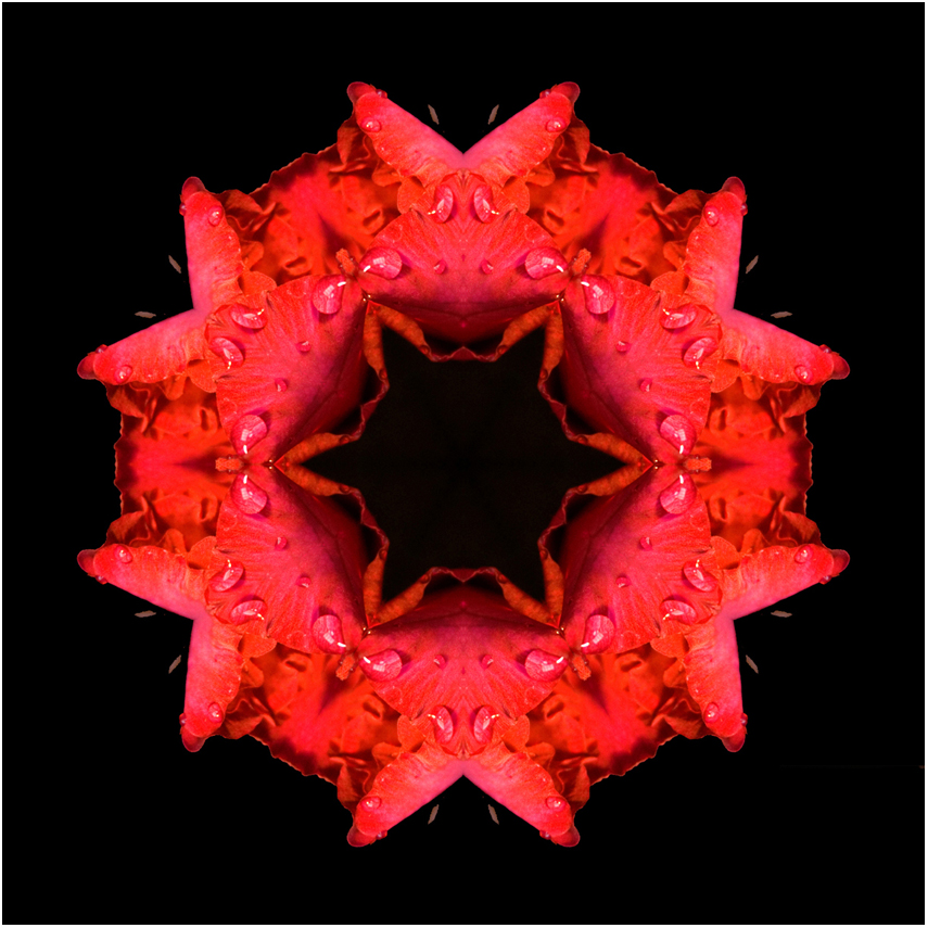 gladioli flower mandala art, Susan Cleaver, Artist, mozaics, mandalas, collage, stock photos, digital art and more, experiencing the visual element of nature through photography