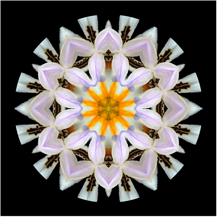 iris flower mandala art, Susan Cleaver, Artist, mozaics, mandalas, collage, stock photos, digital art and more, experiencing the visual element of nature through photography