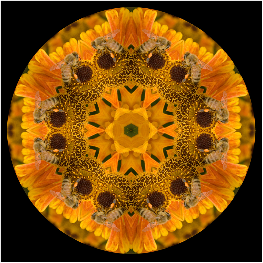 insect honey bee mandala art, new zealand, Susan Cleaver, Artist, mozaics, mandalas, collage, stock photos, digital art and more, experiencing the visual element of nature through photography
