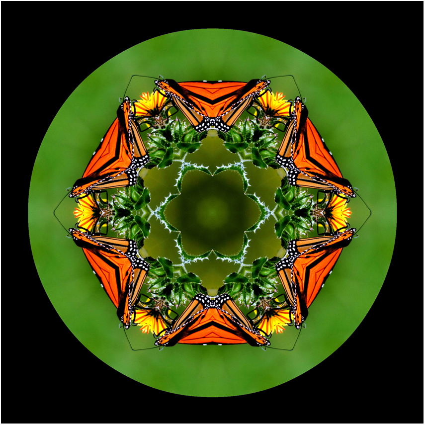 insect monarch butterfly mandala art, new zealand, Susan Cleaver, Artist, mozaics, mandalas, collage, stock photos, digital art and more, experiencing the visual element of nature through photography