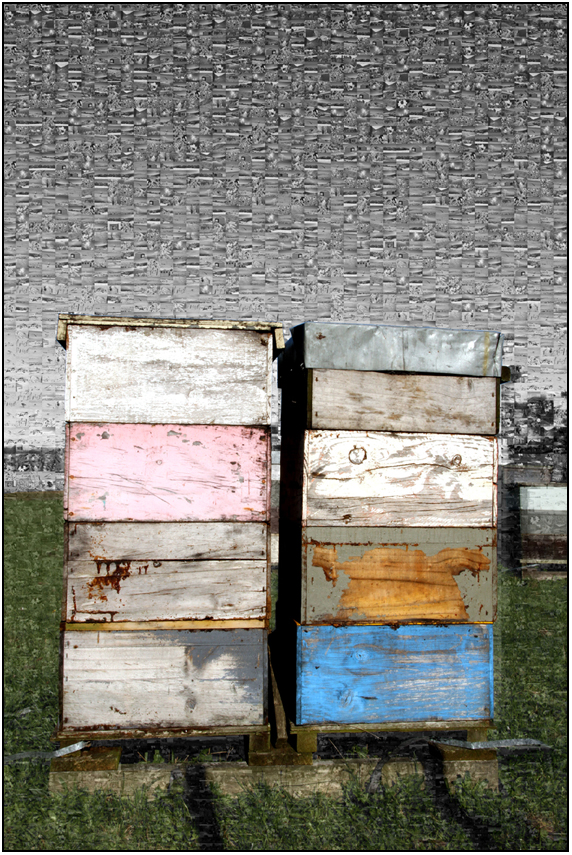 beehives mozaic, bombay hills, Susan Cleaver, Artist, mozaics, mandalas, collage, stock photos, digital art and more, experiencing the visual element of nature through photography