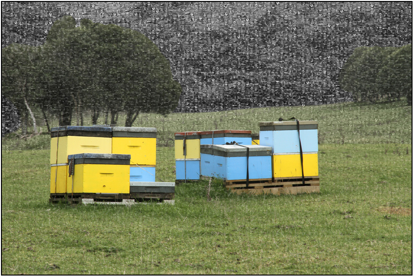 beehives mozaic, lake tarawera, Susan Cleaver, Artist, mozaics, mandalas, collage, stock photos, digital art and more, experiencing the visual element of nature through photography