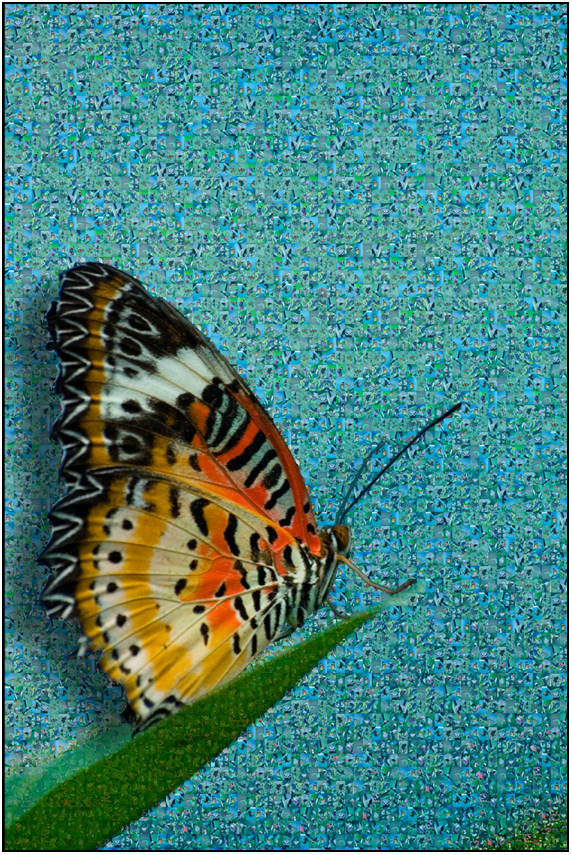 butterfly mozaic, Susan Cleaver, Artist, mozaics, mandalas, collage, stock photos, digital art and more, experiencing the visual element of nature through photography
