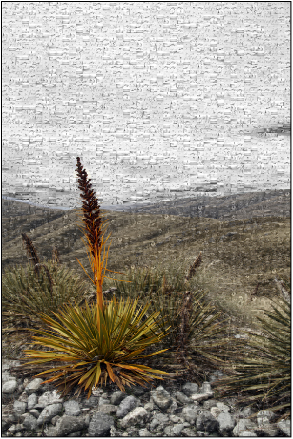 scenic mozaic, speargrass nevis, Susan Cleaver, Artist, mozaics, mandalas, collage, stock photos, digital art and more, experiencing the visual element of nature through photography