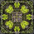 tree, tree fern, tree textile design, surface design, graphic textile art, susan cleaver artist, mandala, moziac, collage art